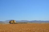 KİMYASAL GÜBRE - Arguvan'da Sarı Bursa Buğdayı Ekildi