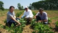 SONBAHAR - Çiftçilerin Ürünlerini Büyükşehir Kontrol Ediyor