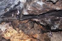 CEHENNEM DERESİ - Dere Yatağındaki Mağara Yarasaların Yuvası Oldu