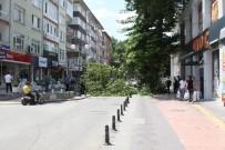 NECİP FAZIL KISAKÜREK - Dev Ağacın Dalı Kırıldı, Cadde Trafiğe Kapandı