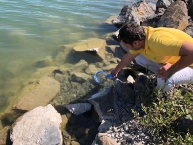 Erzincan'da Balıklandırma Çalışmaları Sürüyor
