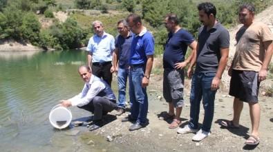 Göl Ve Göletlere 90 Bin Sazan Balığı Yavrusu Bırakıldı