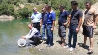 SU ÜRÜNLERİ - Göl Ve Göletlere 90 Bin Sazan Balığı Yavrusu Bırakıldı