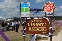 ÖĞRETIM GÖREVLISI - Karesi'de Lavanta Hasadı Yapıldı