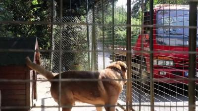 Oktar'ın Bahçesindeki Hayvanlar Barınağa Gönderildi