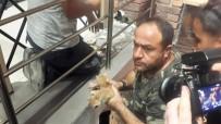YAVRU KEDİ - Ölüme Terk Edilen Kediler Kurtarıldı