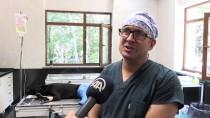ÇETIN KıLıNÇ - Yaralı 'Zeytin' Bakım Merkezinde Tedavi Edildi