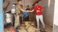 ASKERİ BİRLİK - 'Çöl Tilkileri', Kızılay'a Adak Kurban Bağışında Bulundu