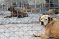 KARNE HEDİYESİ - Geçici Hayvan Bakımevi Hizmete Açıldı