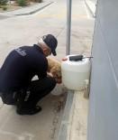 Polis Memuru, Sokak Köpeğine Eliyle Su İçirdi