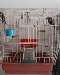 YıLDıRıM BEYAZıT - Saka Kuşlarını Satana 2 Bin 190 Lira Para Cezası