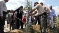ZAFER ENGIN - Yalova'da 15 Temmuz Şehitleri Anısına Fidan Dikildi