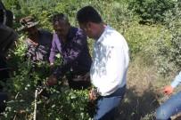 Bitlis'te 'Fıstık Yetiştiriciliği Geliştirme Projesi'