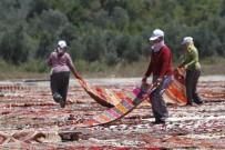 FUTBOL MAÇI - Buğday Tarlası, Halı Tarlasına Dönüştü