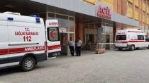 Erzincan'da Ayının Saldırısına Uğrayan Çocuk Yaralandı