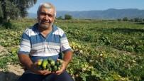 KAYMAKÇı - Turşuluk Salatalık Üreticisi Yeni Ürün Arayışında