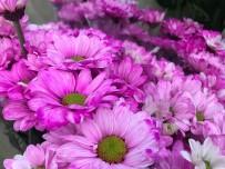 DÜĞÜN SEZONU - Yaz Ayları Ve Düğün Sezonu Çiçekçilerin Yüzünü Güldürmedi