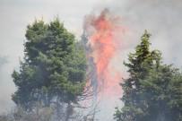 BADEMLI - Konya'da Orman Yangını