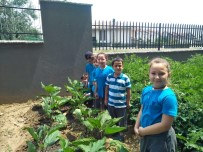HOBİ BAHÇESİ - Öğrencilerin Organik Tarım Heyecanı