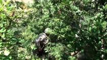 KOMANDO - Tokat'ta Kaybolan 3 Yaşındaki Evrim'i Arama Çalışmaları Sürüyor