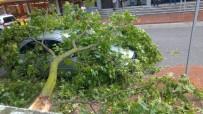 ŞİDDETLİ FIRTINA - Fırtınada Devrilen Ağaç Dalı Otomobilin Üzerine Düştü