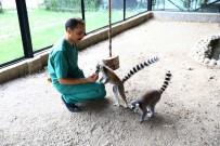 MADAGASKAR - Hayvan Parkındaki Lemurlar İlgi Odağı Oldu