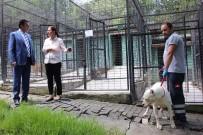 SOKAK HAYVANI - Osmangazi Belediyesi Sokak Hayvanlarına Sahip Çıktı