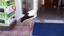Uçamayan Leylek Mağazaya 'Misafir' Oldu
