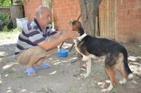 KÜMBET - Yaban Hayvanlarının Yaraladığı Av Köpeğine Şefkat Eli Uzandı