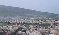 12 Saatlik Yağış Nedeniyle Çobanlar Yaylada Mahsur Kaldı