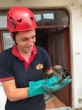 Bacaya Sıkışan Yavru Baykuşu İtfaiye Kurtardı