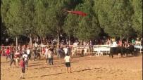 BOĞA GÜREŞİ - Boğa Festivalinde Ortalık Fena Karıştı