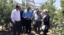 İLAÇ KALINTISI - Elma Kurduyla 'Akıllı Böcek' Mücadele Edecek