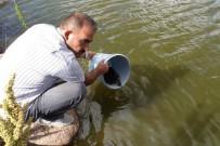 ORMAN BAKANLIĞI - Göletlere 110 Bin Yavru Balık Bırakıldı