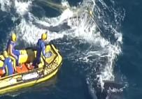 BALINA - Kambur Balina Köpek Balığı Ağlarından Böyle Kurtarıldı