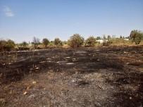 KAYNAK MAKİNESİ - Kaynak Makinesinden Çıktığı İddia Edilen Yangın Zeytin Ağaçlarını Küle Çevirdi