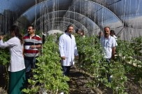PARMAK - Niğde Patates Araştırma Enstitüsü Arı Gibi Çalışıyor