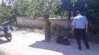 Yaşlı Kadın Meyve Toplarken Duvardan Düşüp Yaralandı