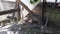 YAVRU KEDİ - 7 Metrelik Kuyuya Düşen Kedi İtfaiye Ekiplerince Kurtarıldı