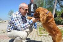 SOKAK HAYVANI - Başkan Akgün Açıklaması 'Hiçbir Sokak Hayvanı Aç Ve Susuz Kalmayacak'