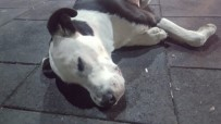 BELEDİYE ÇALIŞANI - Nevşehir'in Gülşehir İlçesinde 3 Köpeğin Belediye Görevlilerince Öldürüldüğü İddiası