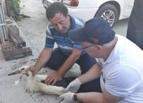 Yaralı Leylekleri İtfaiye Kurtardı