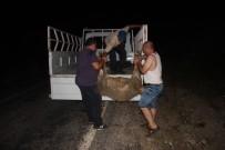 OYMAPıNAR - Alkollü Sürücü Çobana Ve Koyunlara Çarptı