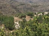 Dağ Keçileri Yavrularıyla Birlikte Görüntülendi