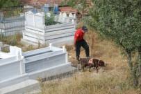 KOMANDO - Evrim'i, Kadavra Köpeği Mavi Mezarlıkta Aradı