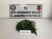 AFYONKARAHISAR - Jandarma Ekiplerinden Uyuşturucu Ve Tarihi Eser Operasyonu