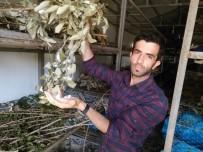 Kullanılmayan Köy Evleri İpek Böceği Besim Evlerine Dönüştürülüyor