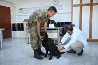 Zeytin Dalı Harekatı - Mayın Arama Köpeklerinin Tedavisi Malatya'da Yapıldı