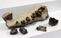 DENIZ KABUĞU - Avcılar'da Roma Ve Bizans Dönemine Ait Sikkeler Ve Dinozor Fosilleri Ele Geçirildi