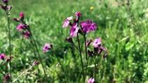 BİYOLOJİK ÇEŞİTLİLİK - Bu Bitkilere Zararın Cezası 49 Bin Lira
